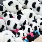 Panda-themed gifts