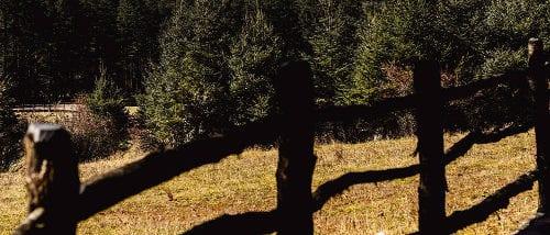 The Spruce Plateau