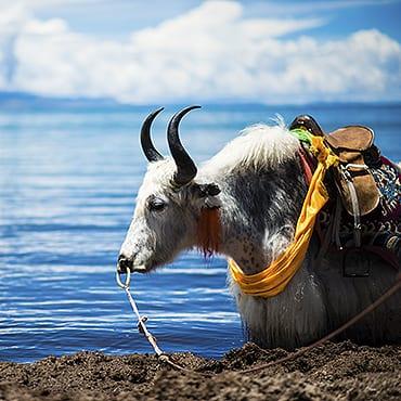 Lhasa Highlights & Namtso Lake 4N5D Tour