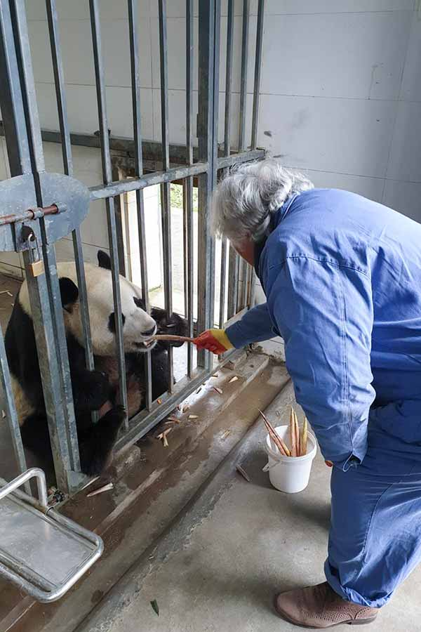December 2019 Tripadvisor Panda Feeding In Chengdu
