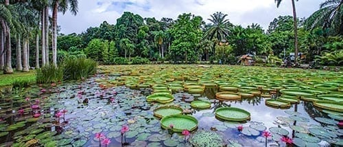 Xishuangbanna Tropical Botanical Garden (chinese Academy Of Sciences)